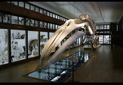 photo of a whale skeleton in a museum
