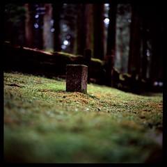 日光 ❁卍❁ Things you find in the woods