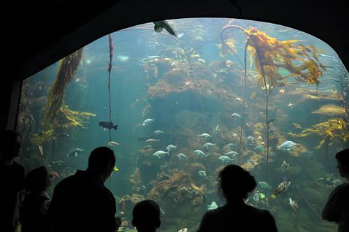 Best Public Aquariums In North America Bigger Job
