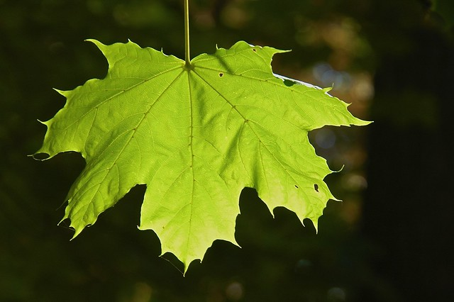 Leaf Light