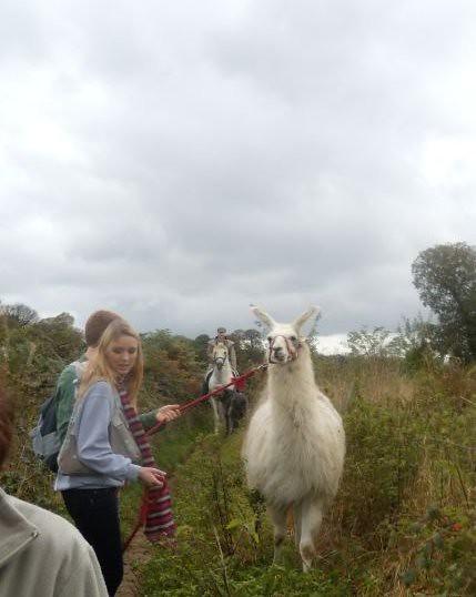 Llama followed by a horse