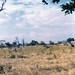 Small photo of The African bush
