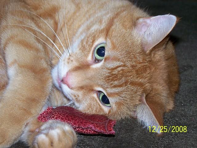 Jake post catnip