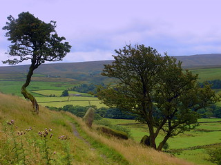 moors and fields