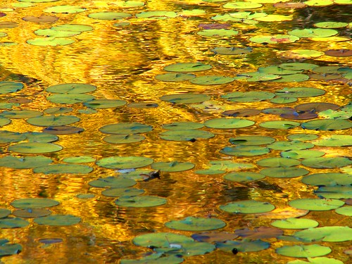 Yellow Monet