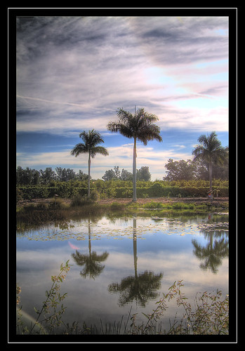 reflection clouds florida palmtree botanicalgarden hdr cloudscape naturelovers naturesfinest