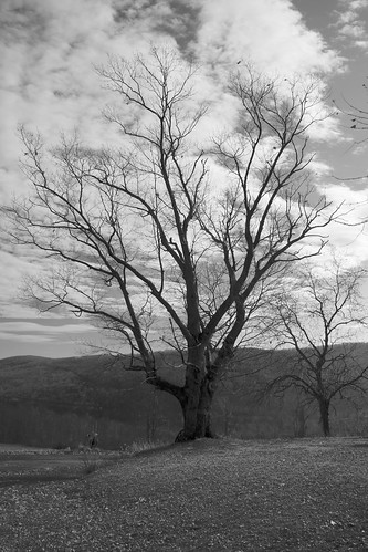 blackandwhite bw white black tree landscape