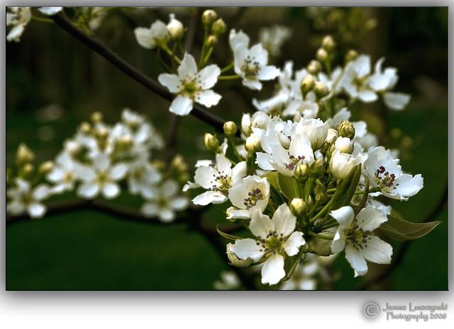 Spring , spring at last ....