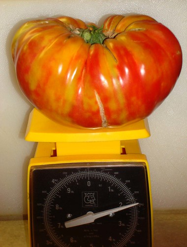 Tomato 'German Striped'