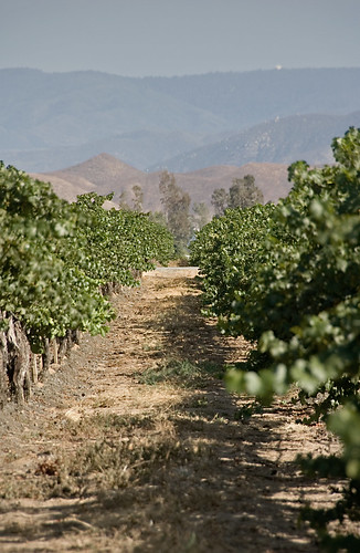 california vineyard vines wine ponte palomar temecula riversidecounty