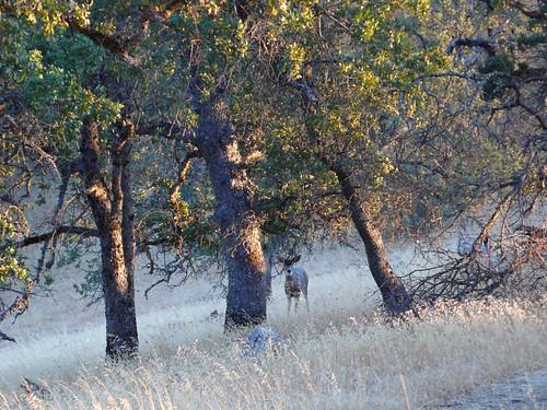 california jacksonranch