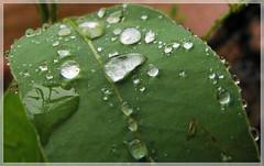 flower(0.0), plant(0.0), fauna(0.0), nopal(0.0), plant stem(0.0), annual plant(1.0), leaf(1.0), macro photography(1.0), flora(1.0), green(1.0), plant pathology(1.0),