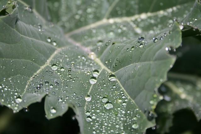 Raindrops 5