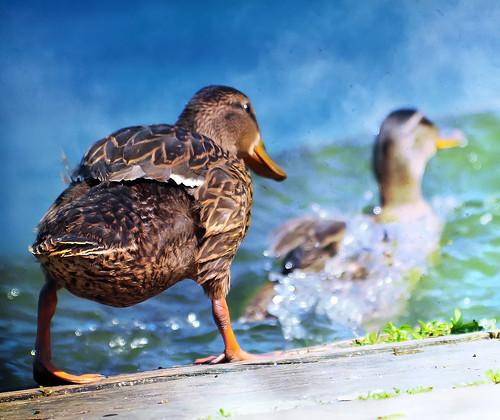 泳げるかなぁ・・