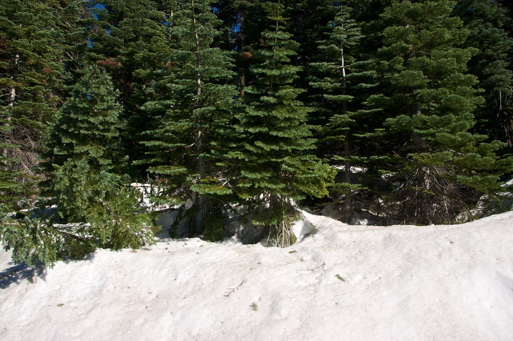 Snow in June on Buck's Lake
