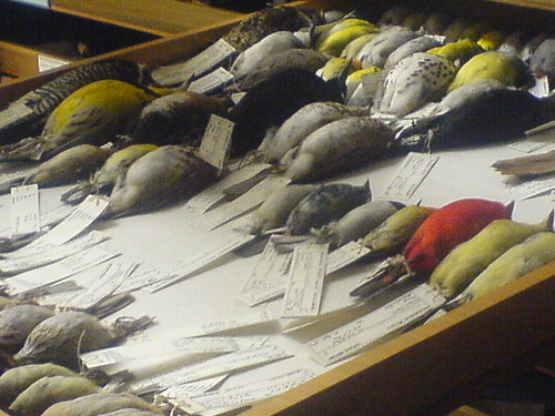 tour of field museum bird collection
