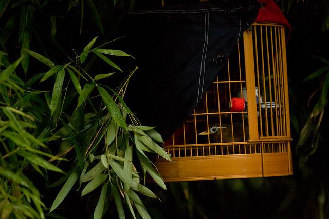 Caged Bird in Tree