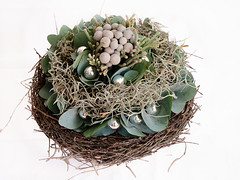 nest, plant, green, food, floristry, twig,