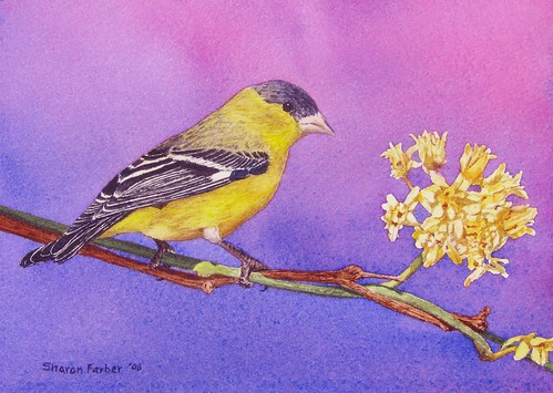 Goldfinch watercolor painting