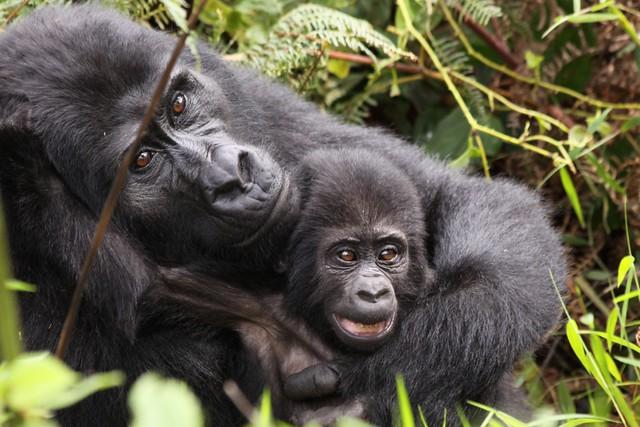 Binary option gorilla