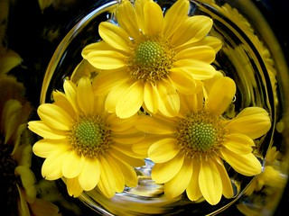 Daisies in a glass ...