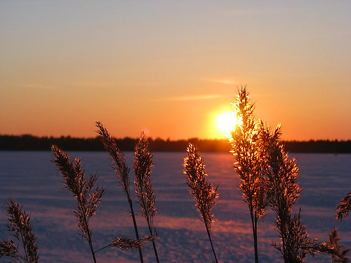 winter light sunset sky orange sun lake snow reflection nature yellow suomi finland reeds march oulu lumi talvi luonto valo maaliskuu auringonlasku aurinko heijastus oranssi taivas keltainen kuivasjärvi supershot mywinners abigfave anawesomeshot ultimateshot rytit