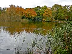 Woodhall Lake