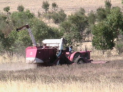 agriculture, farm, field, vehicle, plant, agricultural machinery, harvest, crop, rural area, harvester, tractor,