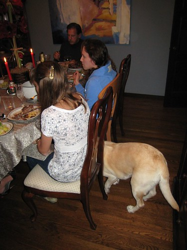 dog sneaking under table IMG_7231