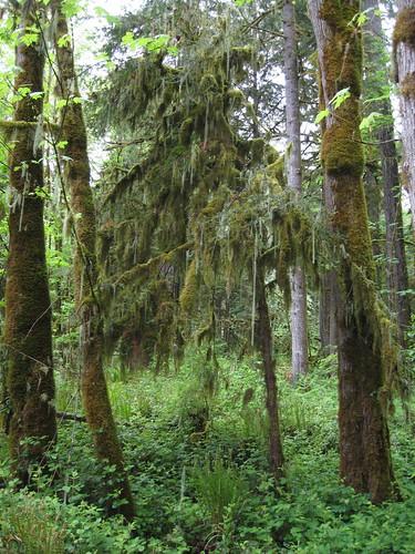 camping fern tree moss cascadiastatepark