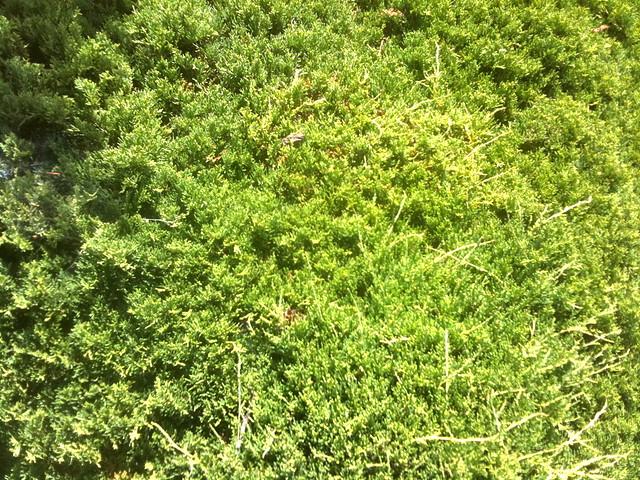 Green Bush Texture | Flickr - Photo ...