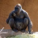 Los Angeles Zoo 086