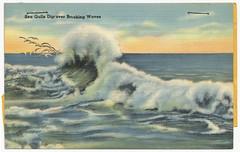 Sea Gulls dip over breaking waves