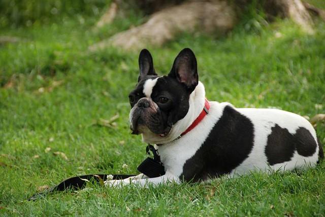 nombre de perros famosos en hollywood