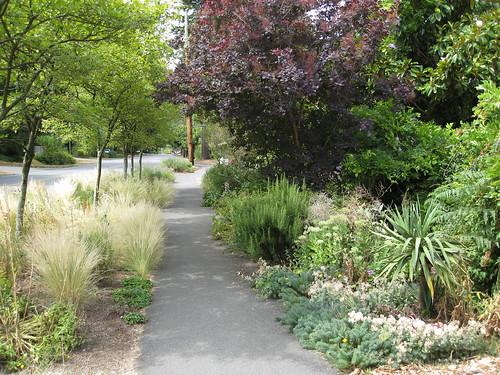 A Very Nice Hellstrip   Lake Forest Park Garden