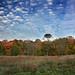 Fall colors at Morton Arboretum by johnkalad