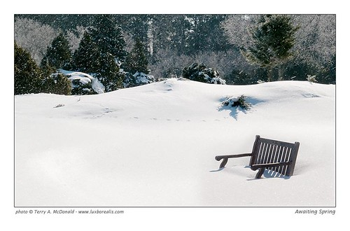 Lone Bench in the Snow, The Arboretum, University of Guelph by Terry McDonald - www.luxborealis.com