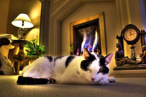 gatto sdraiato sul pavimento del salotto