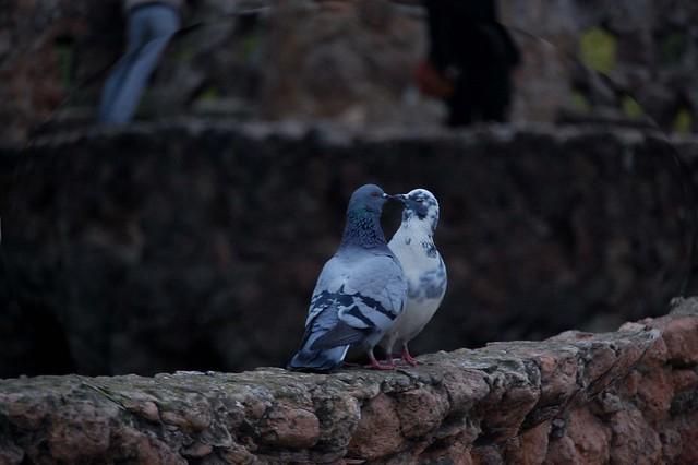 Bird's kiss
