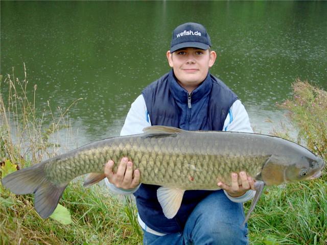 99cm amur grass carp matthias caught this fantastic amur for Grass carp fish