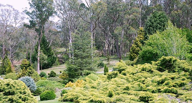 Mt Lofty Botanic Gardens Mt Lofty Botanic Gardens In
