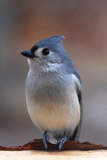 My 100th Bird On Flickr