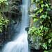 Botanical Gardens and Zoo 046