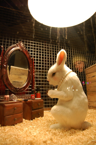 Color Cosmetics Rabbit