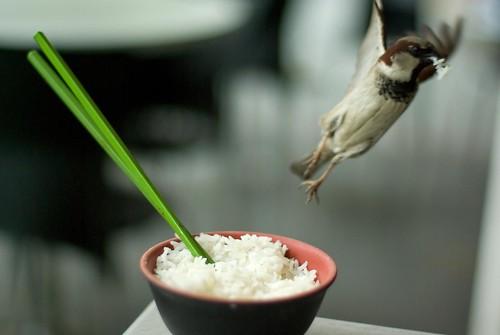 Chopsticks in rice