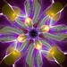 Purple Fractal Flower