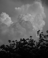 Clouds over Rutgers Gardens (6/1/11)