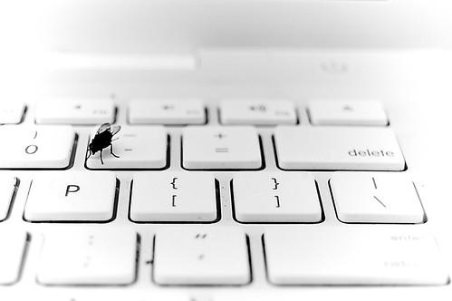 This Fly