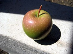 Our First Pink Lady Apple