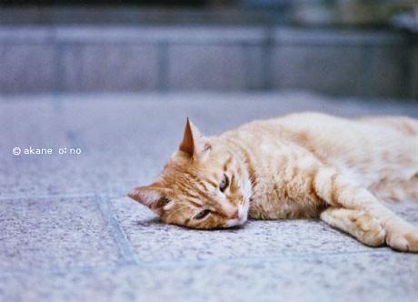 猫神さん by +akane+